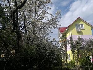 Гостевой дом Фиалка в Адлере