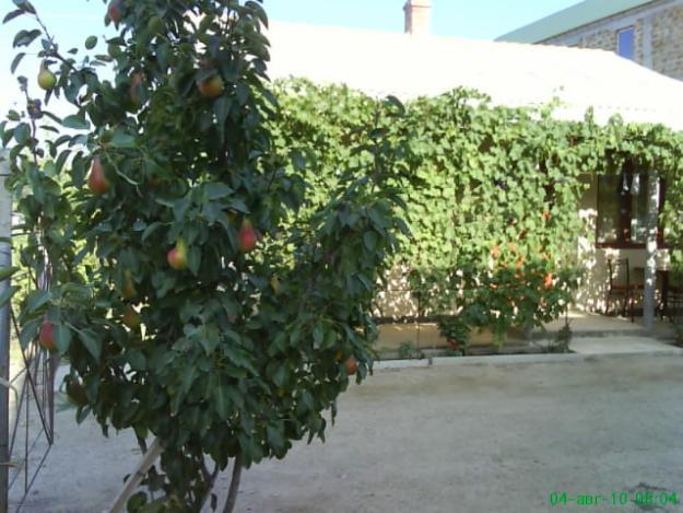 Сад во дворе