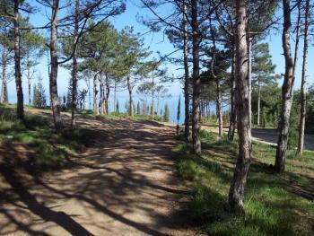 Севастополь. Сосны и море.