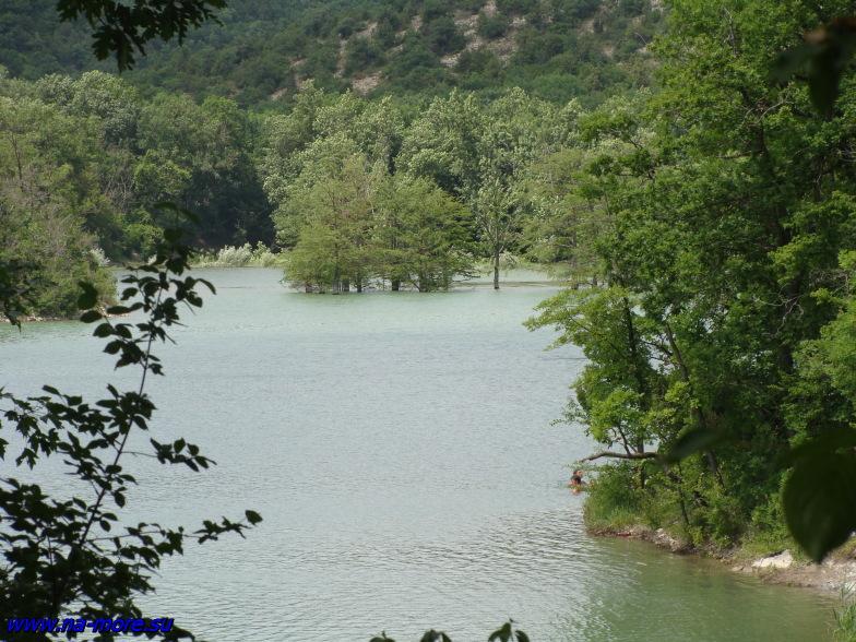Болотные кипарисы на озере Сукко.