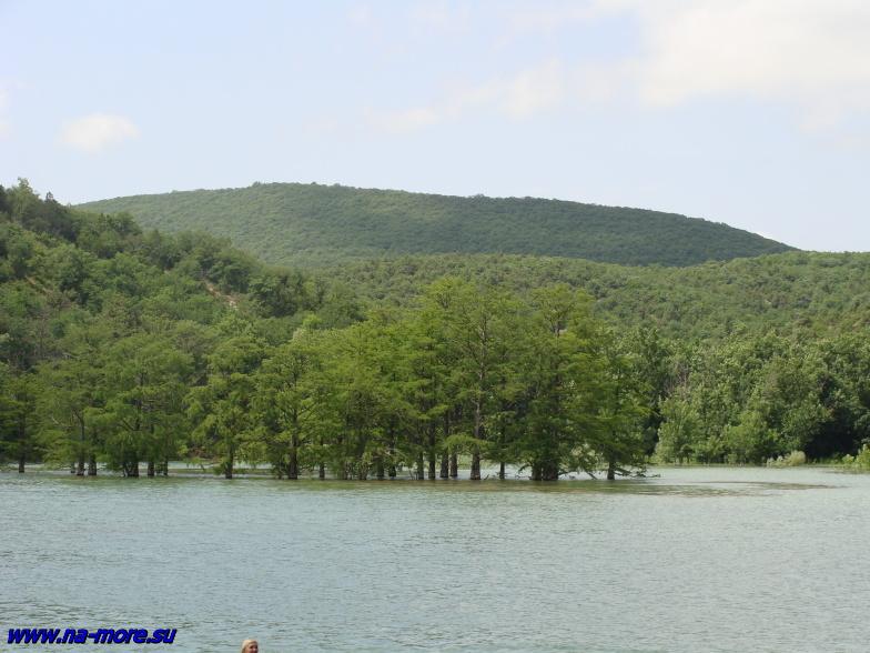 Болотные кипарисы на озере Сукко