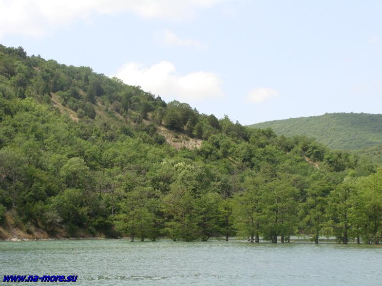 Болотные кипарисы озера Сукко.