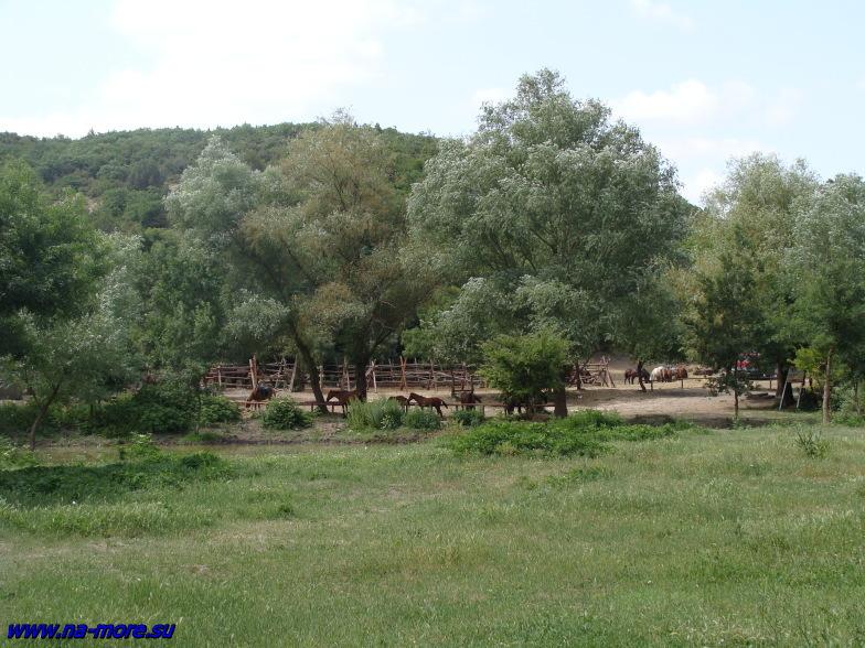 Конная база в посёлке Сукко.
