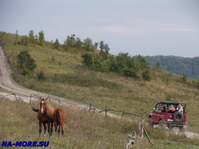 В горах пасутся лошади и проезжают туристы на УАЗике