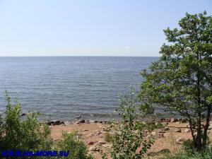 Берег Финского залива. Дикий пляж.