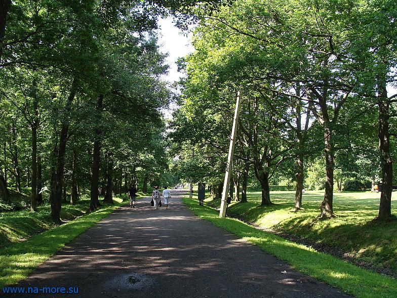 Аллея в парке Дубки в Сестрорецке