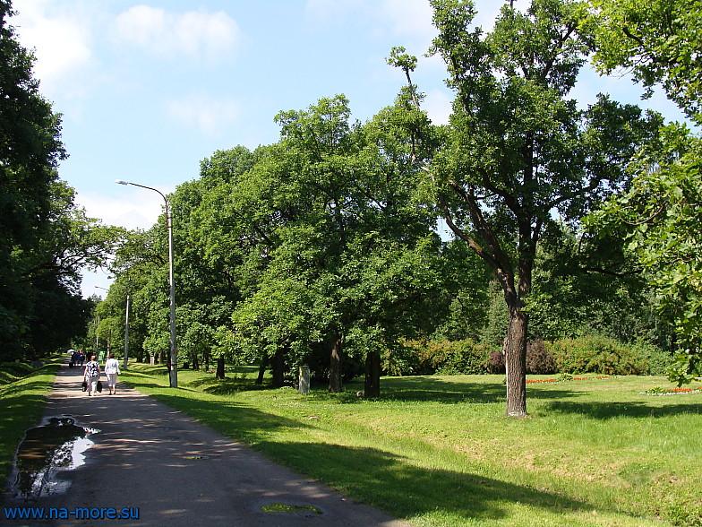 На аллее в парке Дубки в Сестрорецке