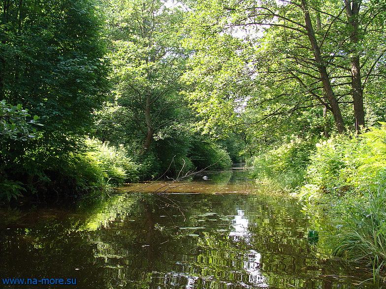 На заброшенных каналах парка Дубки в Сестрорецке.