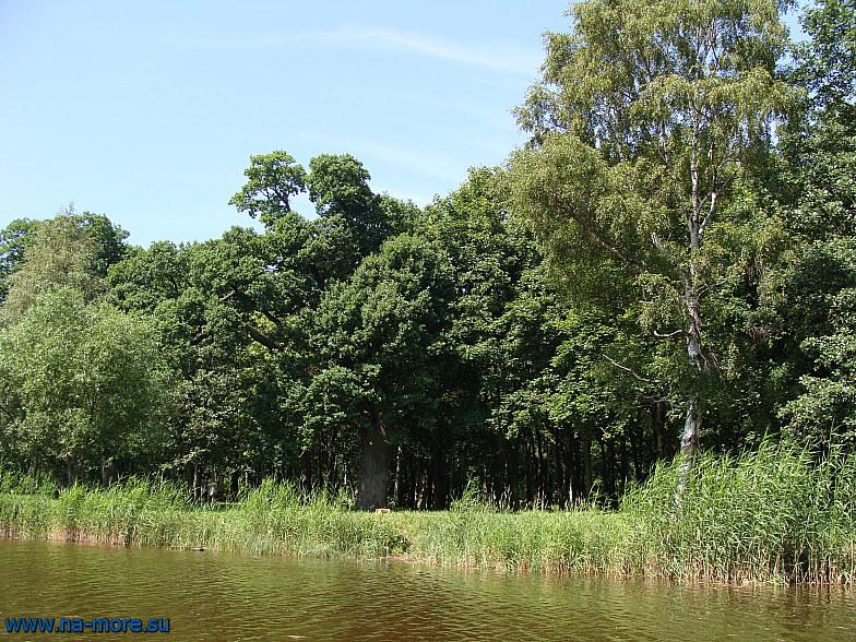 Берег парка Дубки в Сестрорецке.