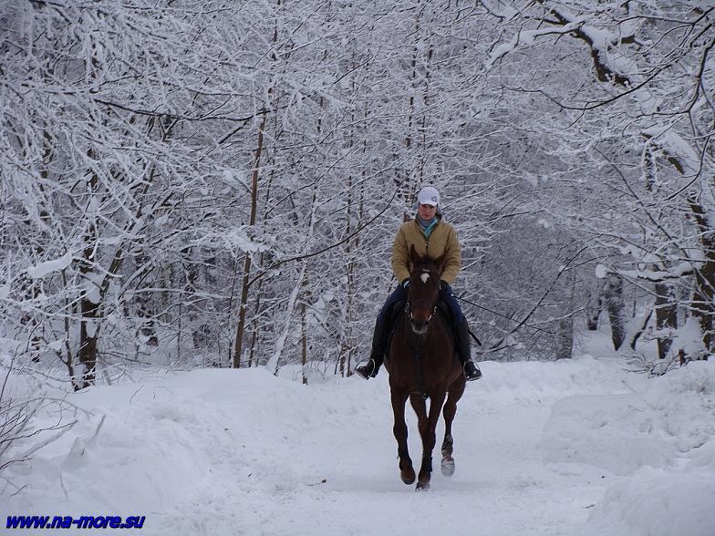 Всадница на берегу Финского залива в Сестрорецке.