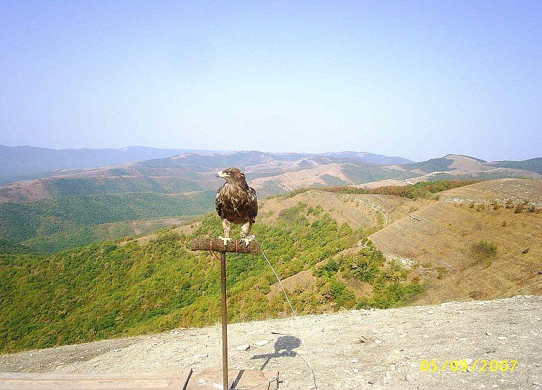 В горах Кавказа. Хищная птица.