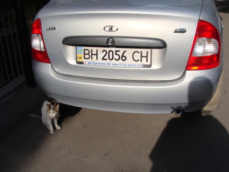 Одесские кошки.