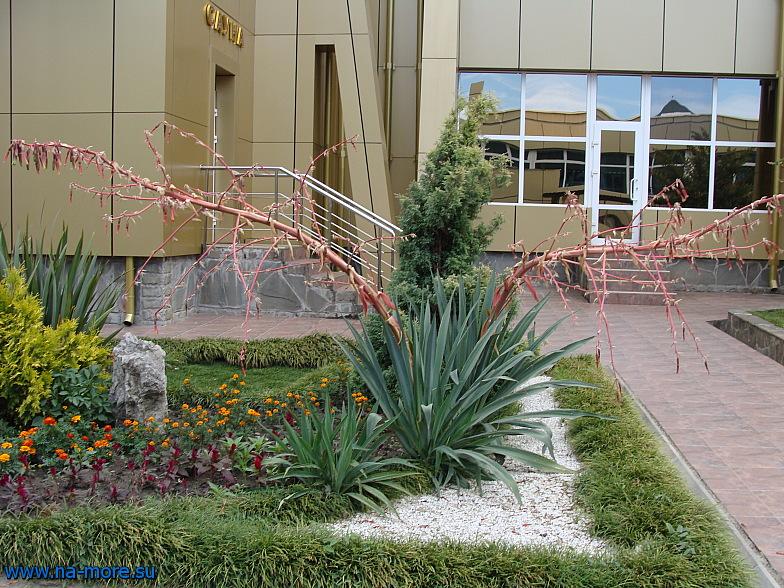 Тропическая ростительность в курортном городке Адлера