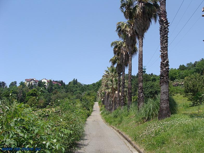 На одной из верхних аллей дендропарка Сочи.