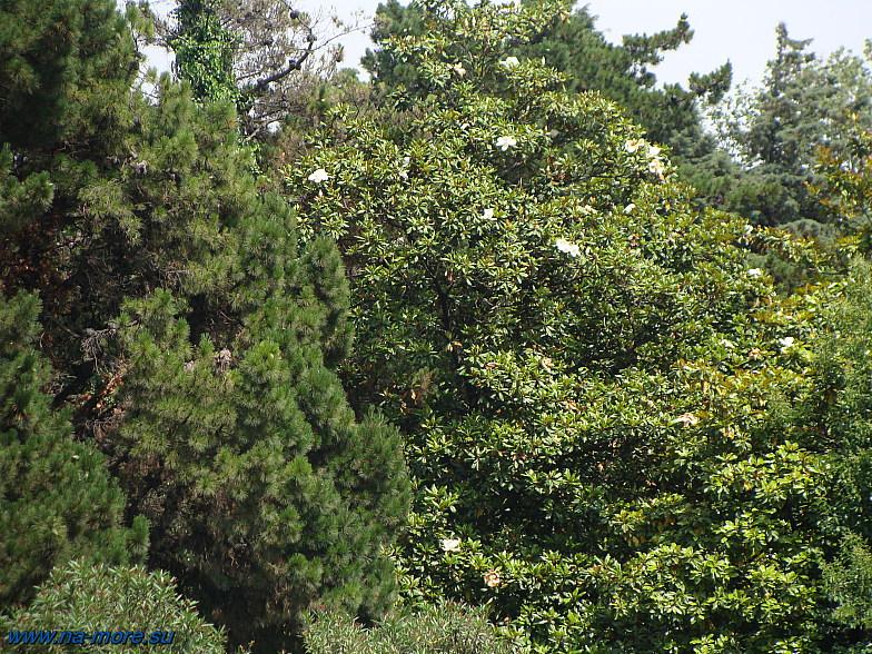 Сочи. Курортный проспект 74. Дендрарий. В нижнем парке.