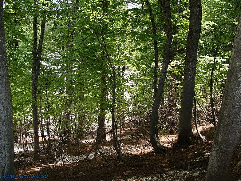 Лес на склонах хребта Ачишхо.