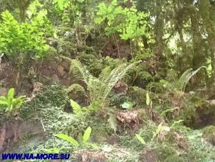 Заросли колхидского леса