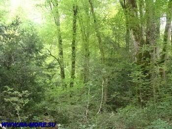 В зарослях колхидского леса на бергах ручья Джегошь.