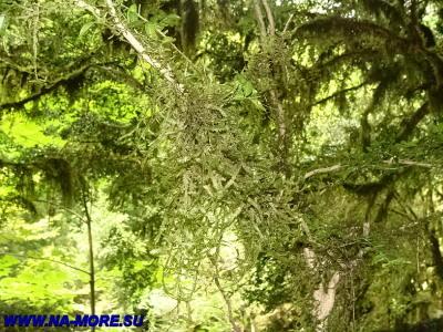 Заросли леса