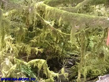 В колхидском лесу