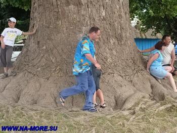 Ствол тюльпанного дерева не смогут обхватить и десять человек