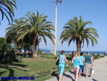 Пальмы побержья в Пицунде