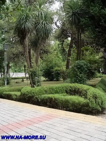 Кордилина южная в парке при пансионате Знание