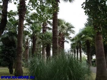 Пальмы в парке пансионата Знание