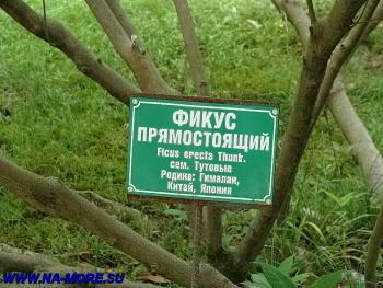Дендрарий Сочи