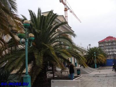 Финиковые пальмы у вокзала Адлера